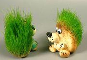Предлагаем  декоративный  газон Травянчик