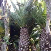 Средиземноморские растения для зимнего сада