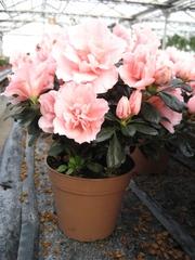Цветы на 8 марта,  подарки на 8 марта,  купить подарки к 8 марта