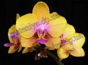 Rasteniya.dp.ua - Информация про комнатные растения,  уход,  полив,  пересадка и много чего интересного