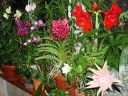 продам домашние растения ОРХИДЕИ  и другие