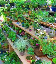 Садоводство (уход за растениями)