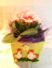 Купить цветы к 8 марта,  подарки,  примула,  бегония,  композиции из цвето