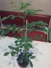 Экзотические плодовые растения