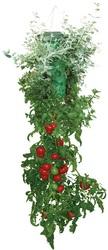 Topsy Turvy Приспособление для выращивания помидор корнем вверх