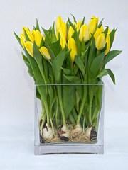 Тюльпаны букеты