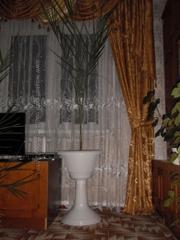 финиковая пальма 12 лет в горшочке на высокой ножке
